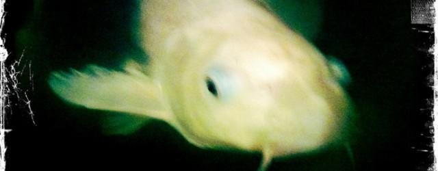 """J'avais alors 5 ans et mes parents avaient négocié le dépôt de mon poisson chez notre voisin le restaurateur chinois le temps des vacances d'été. Cette idée me terrorisait. –...<div class=""""addthis_toolbox addthis_default_style addthis_"""" addthis:url='http://www.boodzawa.com/et-soudain-je-le-reconnus/' addthis:title='Et soudain, je le reconnus ' ><a class=""""addthis_button_facebook""""></a><a class=""""addthis_button_twitter""""></a><a class=""""addthis_button_email""""></a><a class=""""addthis_button_pinterest_share""""></a><a class=""""addthis_button_compact""""></a><a class=""""addthis_counter addthis_bubble_style""""></a></div>"""