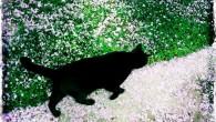 """J'ai toujours détesté chez toi ce côté indépendant, insaisissable…Un vrai caractère de chat. Tu peux m'ignorer superbement toute la journée pour ensuite venir te blottir contre moi quand la nuit...<div class=""""addthis_toolbox addthis_default_style addthis_"""" addthis:url='http://www.boodzawa.com/je-sors-les-griffes/' addthis:title='Je sors les griffes ' ><a class=""""addthis_button_facebook""""></a><a class=""""addthis_button_twitter""""></a><a class=""""addthis_button_email""""></a><a class=""""addthis_button_pinterest_share""""></a><a class=""""addthis_button_compact""""></a><a class=""""addthis_counter addthis_bubble_style""""></a></div>"""