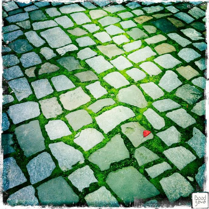 paves-fleure-rouge-pelouse